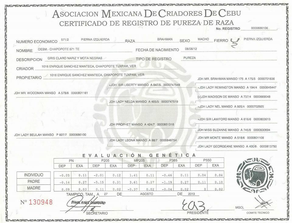 Registro Chapopote 571