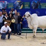 Chapopote 804 - Campeón Becero Nacional 2015