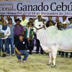 Maya 750 - Campeona joven Mayor Nacional 2017