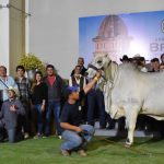 Maya 882 - Campeona Adulta Reservada - XXll Exposición Nqcional De Ganado Brahman 2019